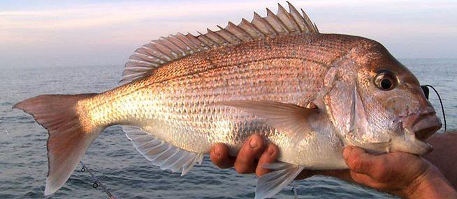 Fishing Charters Adelaide